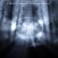 Alienforest - A Sick Mind's Hologram Mp3